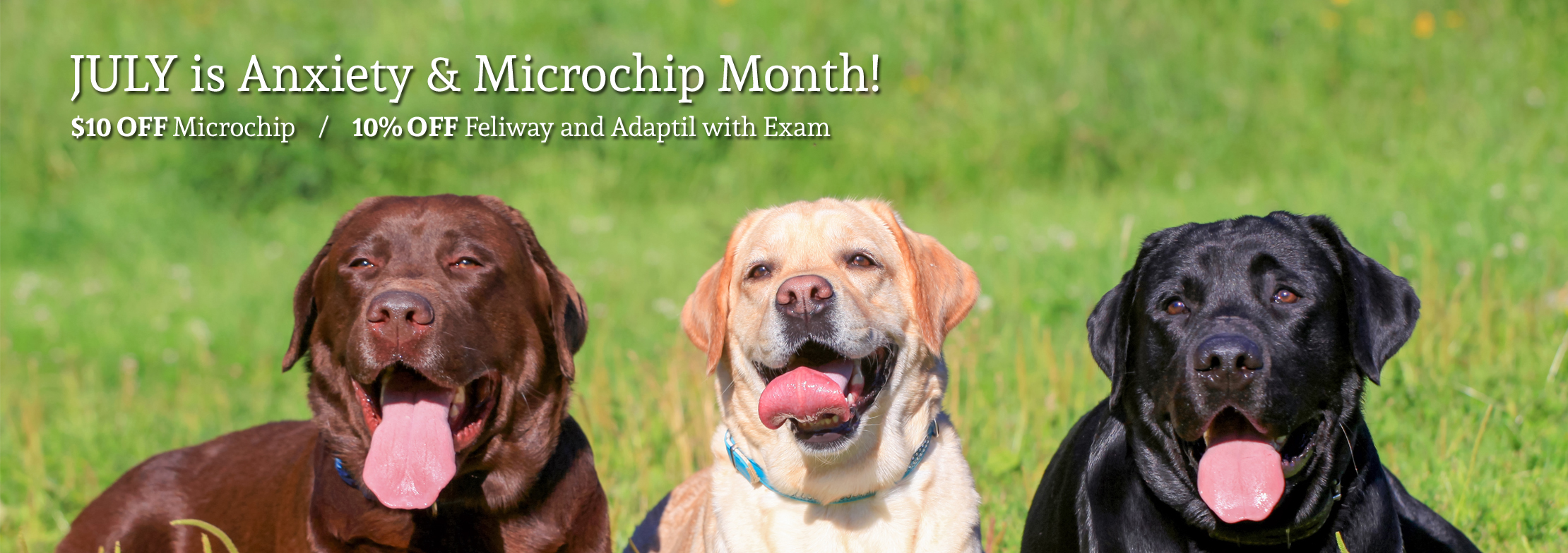 bayview_AH_July is Anxiety & Microchip Month_slider
